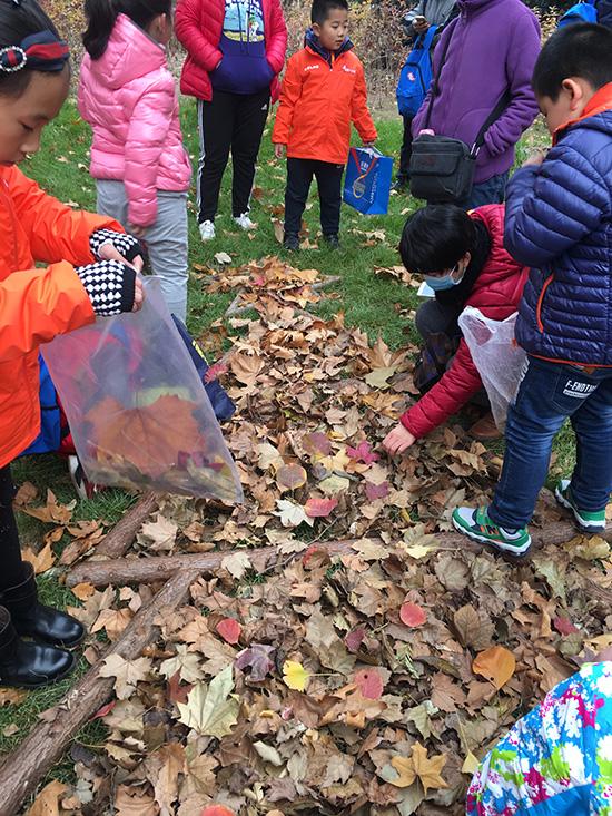 本次活动分为捡树叶,画圣诞树,制作树叶面具,作品秀等环节