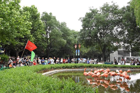 """石家庄市动物园快乐之旅 ——""""六一·动物百变脸谱"""" 亲子科普活动"""