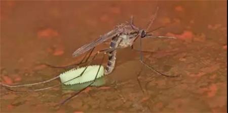 世界上最危险的动物?竟然是蚊子!